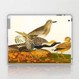 Black-bellied Plover Bird Laptop & iPad Skin