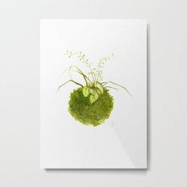 Kokedama 1 Metal Print