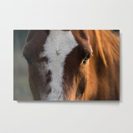 Chestnut Arabian Metal Print