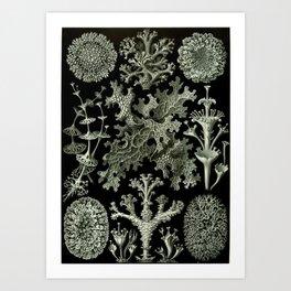 Naturalist Lichen Art Print