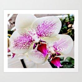 Pink Orchids Art Print