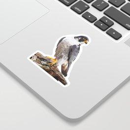 Majestic: Peregrine Falcon Sticker