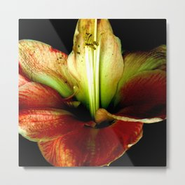 Red Green Yellow Blossom with Calyx Metal Print