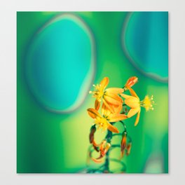 Bulbine flower on green and blue Canvas Print