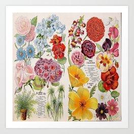 Iowa Seed Co vintage flowers Kunstdrucke