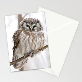 Boreal owl with prey Stationery Cards