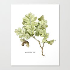English Oak Canvas Print