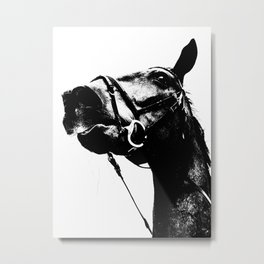 ALFRED THE HORSE Metal Print