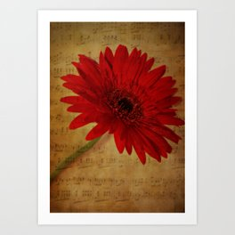 Musical Gerbera Art Print