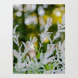 White Oleander Bokeh Poster