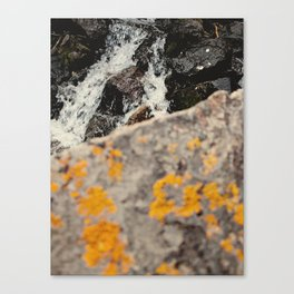 Colorado rock, stream Canvas Print