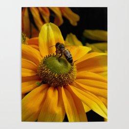 sunny wasp Poster
