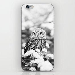 Owl in Flowering Tree iPhone Skin