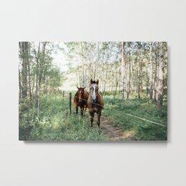 Summer Horses II Metal Print