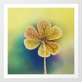 Heart-shaped Clover like Oxalis Macro. St Patrick's Day Art Print