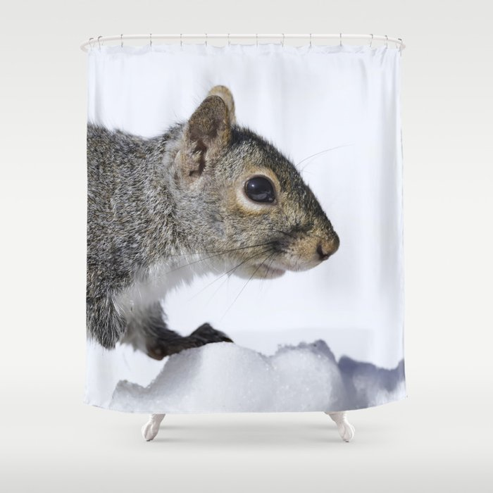 Snow Squirrel Shower Curtain By Rogerporter