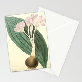 Roscoe, Margaret (1786-1840) - Floral Illustrations of the Seasons 1831 - Colchicum Byzantinum Stationery Cards