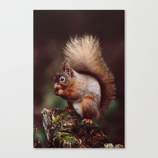 RED SQUIRREL. Canvas Print