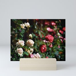 Rose 376 Mini Art Print