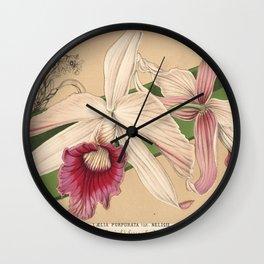 Flower laelia purpurata nelisii8 Wall Clock