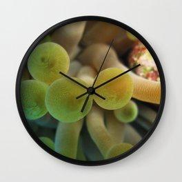 Anemone Cayman Wall Clock