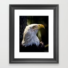 Proud Bald Eagle Framed Art Print