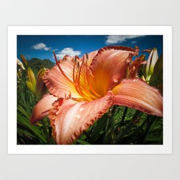 Basking in the Sunlight ~ Peach Colored Lily in a Flower Garden on a Hot Summer Day Art Print