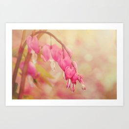 Bleeding Heart Morning Art Print