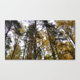 Forest Widerness In Autumn Canvas Print