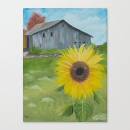 Sunflower with weathered barn Canvas Print