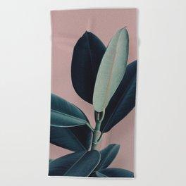 Ficus elastica - berry Beach Towel