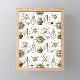 Ernst Haeckel - Phaeodaria Framed Mini Art Print