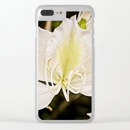 Butterfly tree or Bauhinia variegata Clear iPhone Case