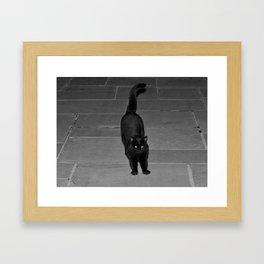 Spunky Black Cat Framed Art Print