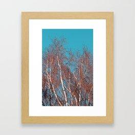 BIRCH in the AUTUMN Framed Art Print