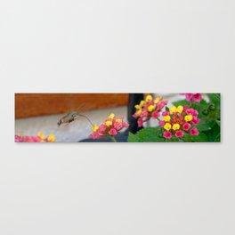 Flowers in Croatia Canvas Print