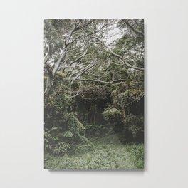 Jungle of Trees in Hilo, Hawaii Metal Print