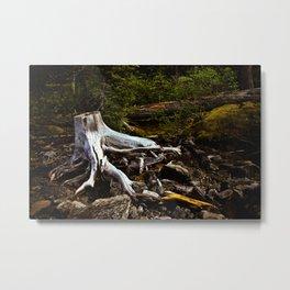 driftwood at rawson creek Metal Print