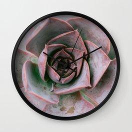 Pastel rose pink succulent | Botanical garden | Travel photography art print Wall Clock