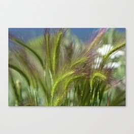 Ripened cheatgrass in green and pink Canvas Print