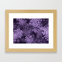 Purple Laceflower Framed Art Print