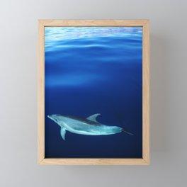 Dolphin and blues Framed Mini Art Print
