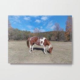 Horse in pasture  Metal Print