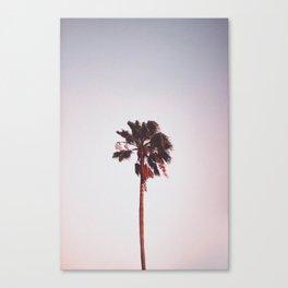 Pink Palm Tree Canvas Print
