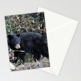 Black Bear cub Stationery Cards