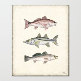"""Inshore Slam!"" by Amber Marine ~ Redfish, Snook, & Trout Watercolor Illustration, (Copyright 2013) Canvas Print"