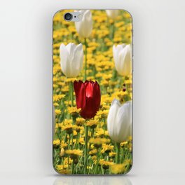 tulips in a field of daisies iPhone Skin