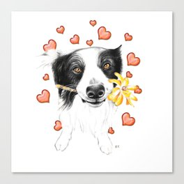 Border Collie And Hearts Canvas Print