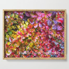 Barberry Fall Colors Serving Tray
