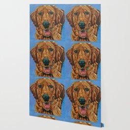 Coper the Golden Retriever Dog Portrait Wallpaper